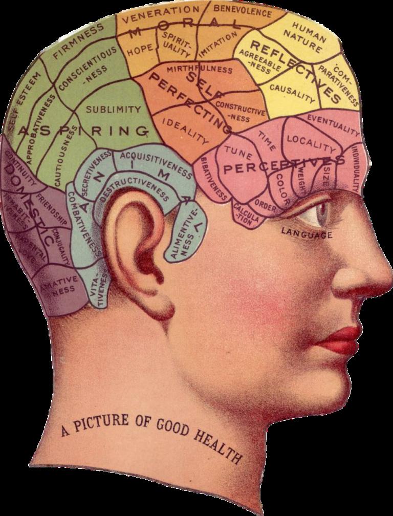 Das Frontalhirn – Steuerungszentrale des menschlichen Gehirns